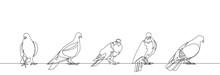 Pigeon One Continuous Line Vec...