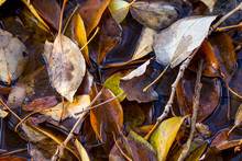 A Medley Of Twigs And Dead Leaves Of Various Colors In The Puddle In Autumn As A Background