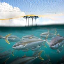 A School Of Farmed Kingfish Swim Together Under A Protective Predator Net In An Open Sea Fish Farm
