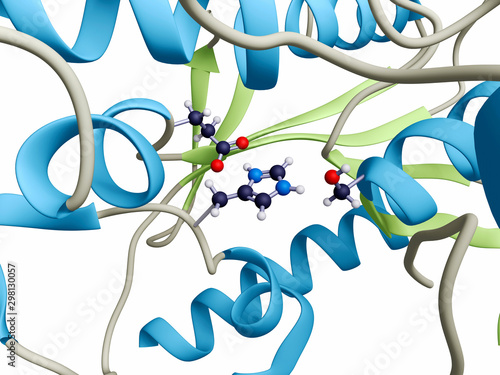 Photo The active site of the enzyme acetylcholine esterase
