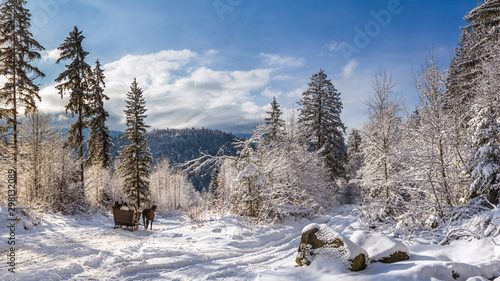 Fotobehang Winter landscape, panorama, banner - view of the snowy road with sleighs, harnessed by horses, in the winter mountain forest