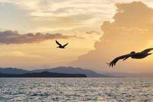 Pelicans Flying Over Pacific Ocean / Costa Rica