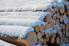 Stacked Logs Of Firewood With ...