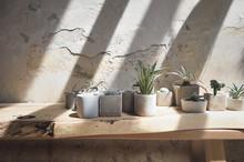 Succulents In Concrete Pots