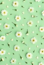 Primrose Background On Green
