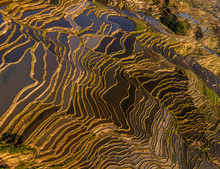 Aerial View Of The Yuanyang Ha...