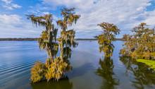 Aerial View Of Bald Cypress Swamps, Louisiana-Texas, USA