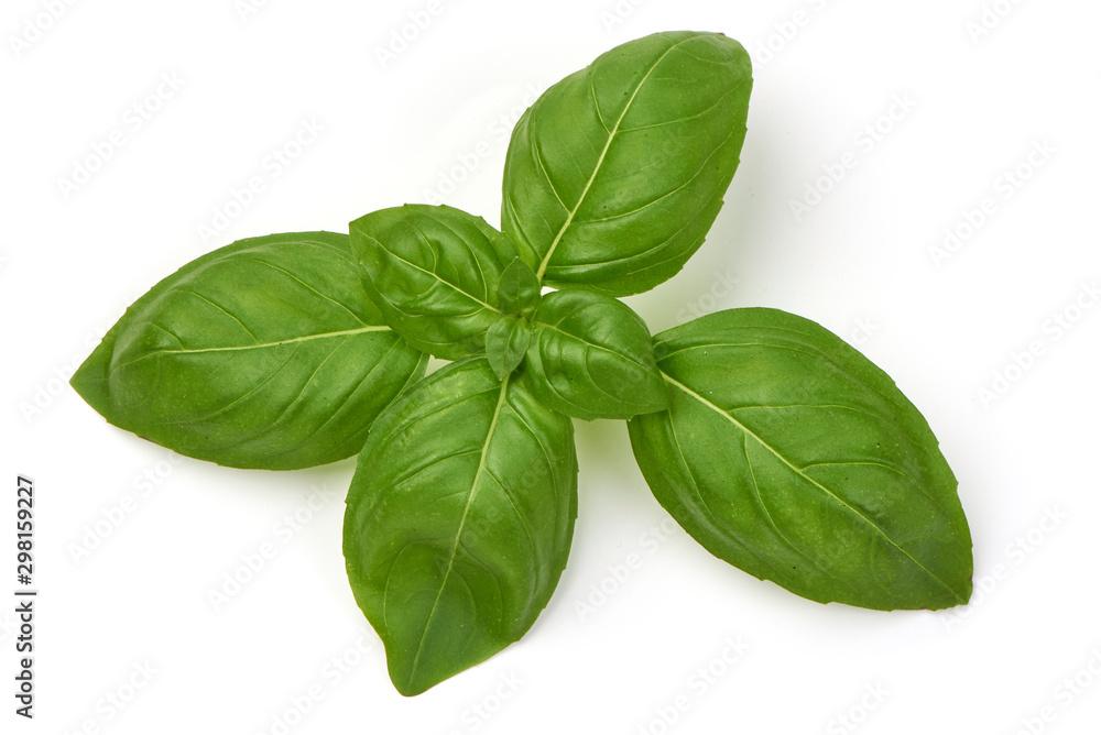 Fototapety, obrazy: Fresh Green Basil Leaf, isolated on white background