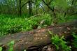Pilze im Nationalpark Polesie, Polen - mushrooms in Polesie National Park, Poland