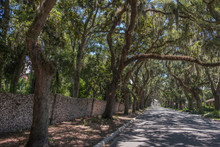 Treelined Road In St. Augustine, USA