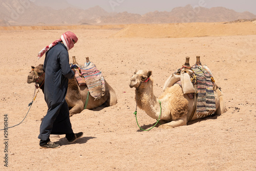 Beduin And Camels Canvas Print