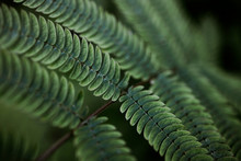 Abstract Green Fern  Backgground In Nature.