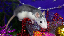 Gray Rat In A New Year's Decor. Symbol Of The Year 2020 Is A Rat