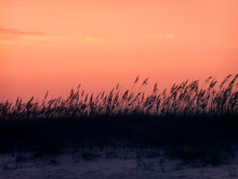 Sea Oats In The Sunset