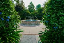Peeking Through Lush Green Foliage At A Fountain In Dallas, Texas