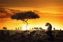 African Safari Sunset Scene Wi...