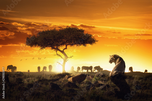 African Safari Sunset Scene With Lioness Wallpaper Mural