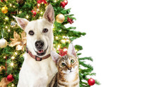 Christmas Cat And Dog White We...