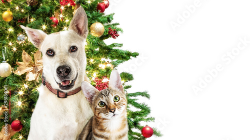 Cadres-photo bureau Chien Christmas Cat and Dog White Web Banner