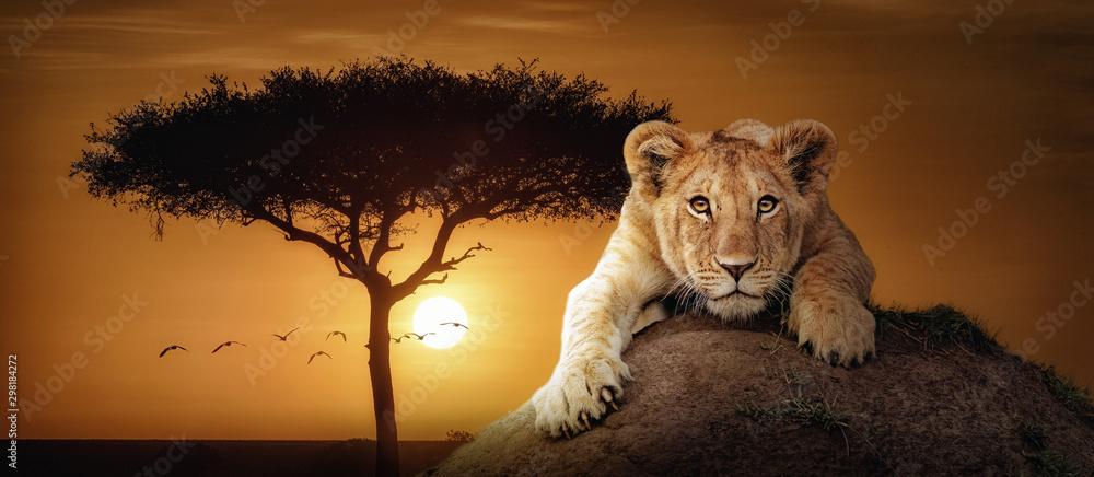 Fototapeta Lion Cub African Sunset Scene Web Banner