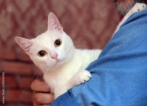 cute white albino cat Wallpaper Mural
