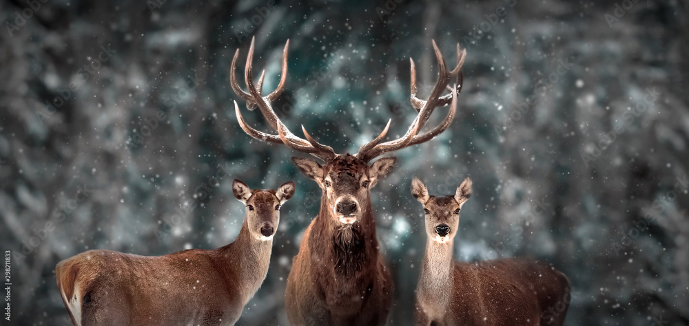 Fototapeta Noble deer family in winter snow forest. Artistic winter christmas landscape. Winter wonderland.