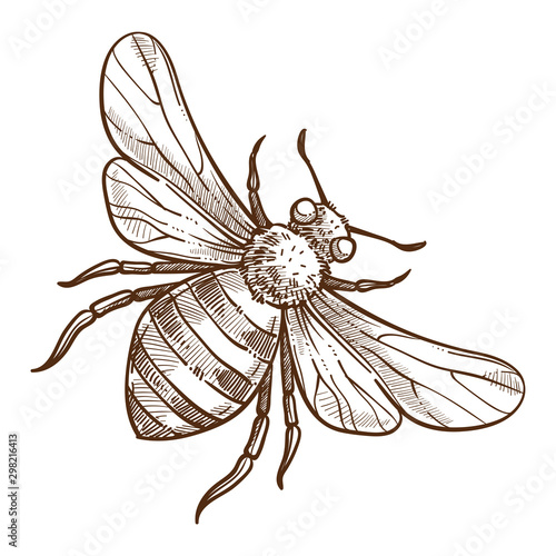 Canvas-taulu Stinging insect, bee isolated sketch, striped bug
