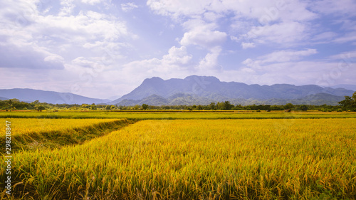 Foto auf Gartenposter Flieder Rice field and sky background. Green rice fields, Rice fields Golden yellow On the mountains.