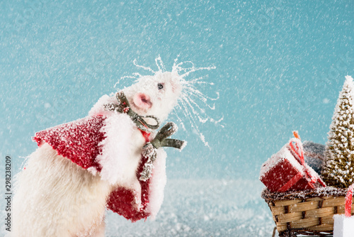 rat in costume and wicker sled with christmas tree and gift boxes in New Year