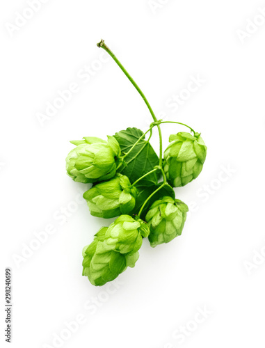 A fresh hops brunch with cones, isolated on white background. Green ripe hop plant harvest, beer brewing concept.