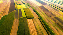 Colorful Farm Fields With Crop. Abstract Patterns. Aerial Drone View