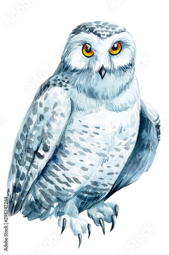Poster Uilen cartoon polar owl on an isolated white background, watercolor illustration