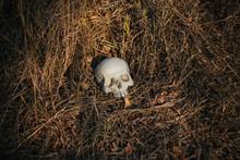 The Human Skull, Damaged, Pierced, Lies On The Ground In Dry, Autumn Grass. Halloween, Dead, Undead.