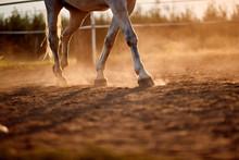 Horse Foot Hoof Run  Outdoor