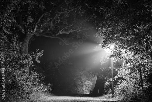 Fotografia  Misty cobblestone street in forest, Foggy road in forest, Laterns, light beams,
