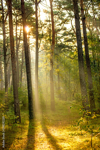 forest at the Baltic coast in Poland with light beams Fototapet