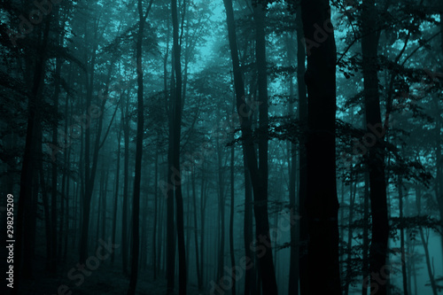 fototapeta na drzwi i meble Misty fairytale woods, scary halloween concept. Foggy forest.