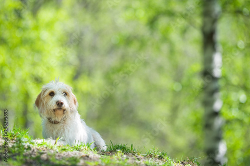 Foto  Young dog resting on park lawn.