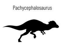 Pachycephalosaurus. Ornithisch...