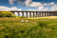 Famous Ribble Valley Viaduct Railway Crossing Seen In All Its Glory. Set In The Heart Of The Dales,  A Number Of Paths Can Be Seen.