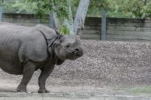 Baby Rhino And Mother Rhino At The Buffalo Zoo