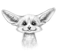 Hand Drawn Cartoon Fennec Fox ...