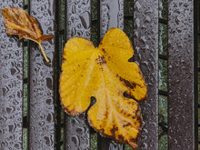 Overhead View Of Yellow Leaves On Wet Metal Surface