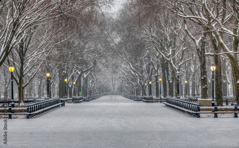 Fototapety, obrazy: Central Park in winter