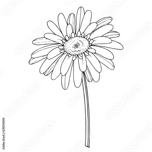 Fototapeta Vector Gerbera floral botanical flower