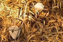 Eucalyptus Forest Floor In Sun...