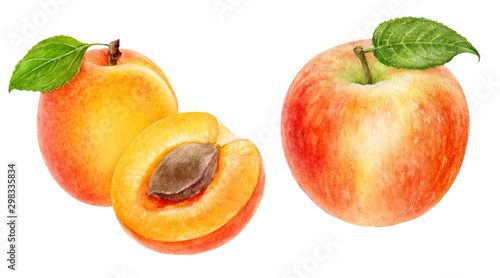 Apple apricot set composition watercolor isolated on white background Fotobehang