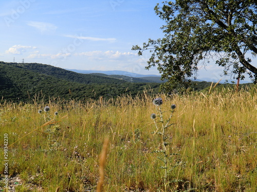 Cuadros en Lienzo Garrigue et collines
