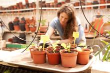 Seedlings In Flowerpots With W...