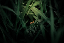Small Grasshopper In The Grass Sitting On A Leaf